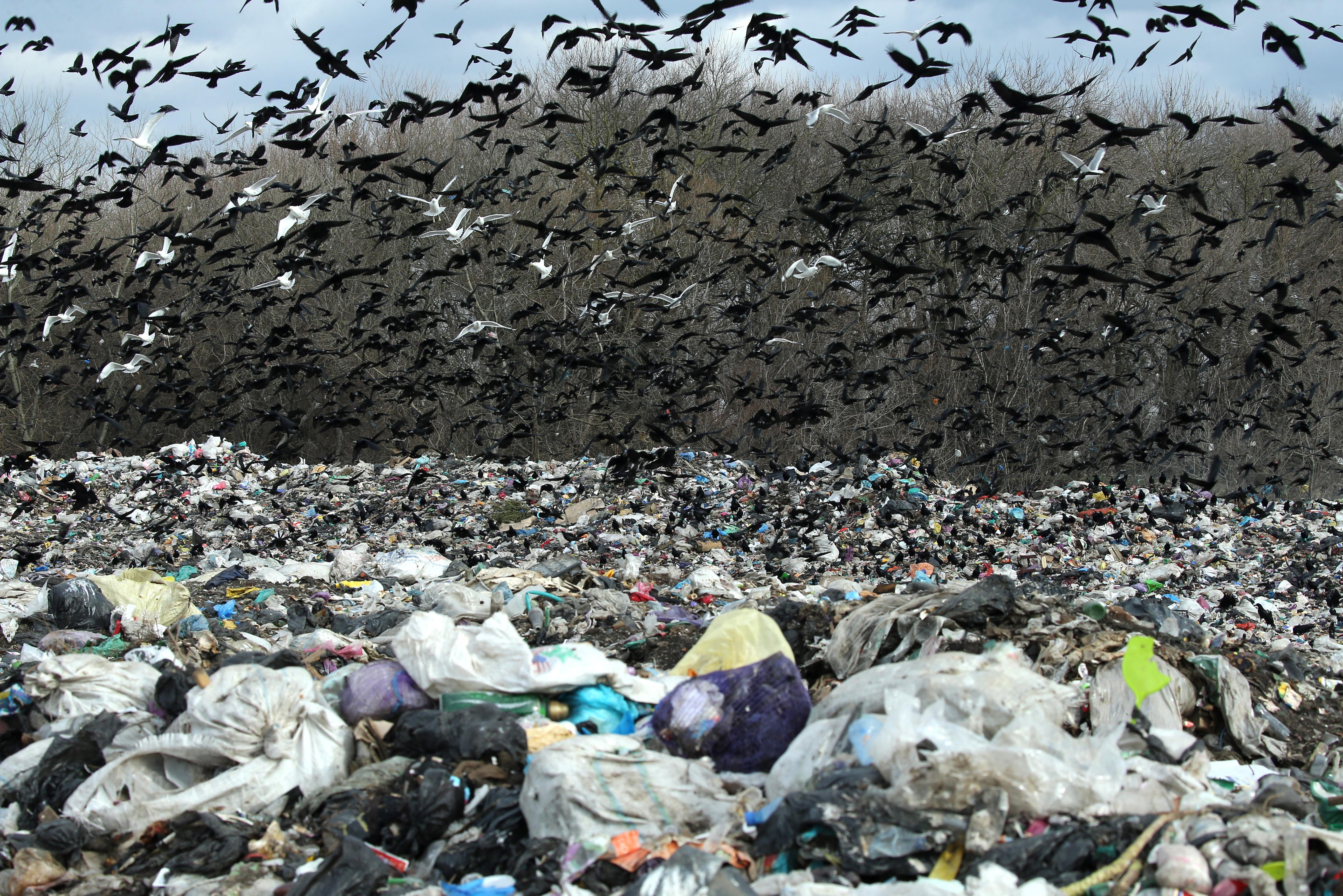 12 свалок на Северном Кавказе включены в проект Минприроды по ликвидации экологически вредных объектов