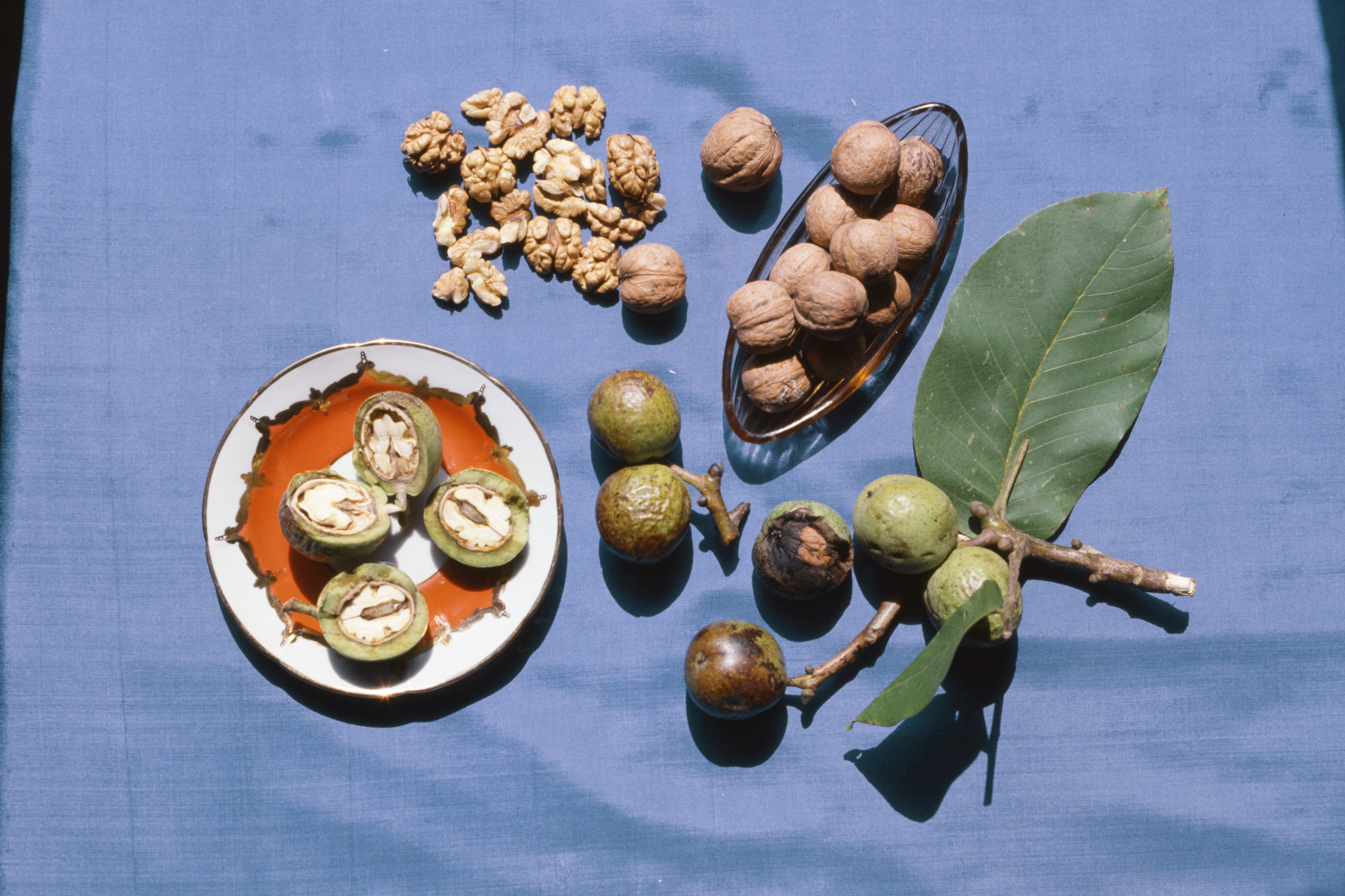 В Ингушетии будут выращивать грецкие орехи на экспорт